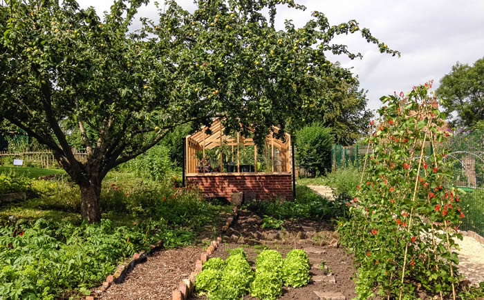 Greens Windmill community garden